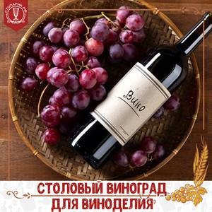 Столовый виноград для приготовления вина