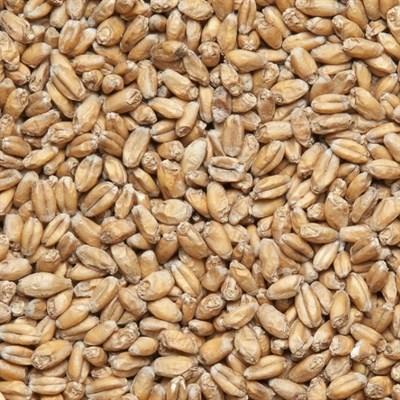 Солод пшеничный Wheat malt Финляндия - фото 8048