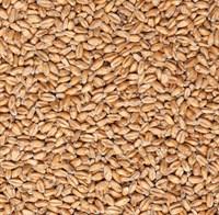 Солод пшеничный Бельгия MDC